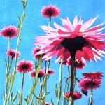 Everlasting wildflowers