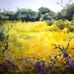 yellow carpet, yellow wildflowers, watercolour wildflowers, watercolor wildflower painting