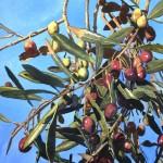 Afternoon Olives