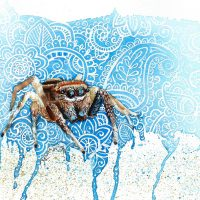 jumping spider, jumping spider painting, watercolor jumping spider, watercolour jumping spider