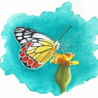 butterfly painting, watercolour butterfly, watercolor butterfly, red and yellow butterfly,
