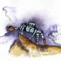 peacock spider, peacock spider painting, painting of a peacock spider, watercolor peacock spider, watercolour peacock spider