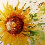 Sunflower Blaze