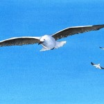 seagull painting, watercolor seagull painting,