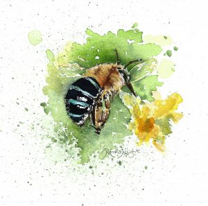 katrina, bee painting, blue-banded bee, blue banded bee, blue bee, watercolor bee, watercolour bee