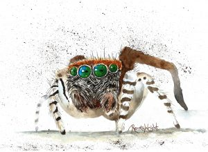 jumping spider, jumping spider art, spider art, watercolour spider, watercolor spider,