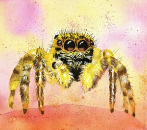 jumping spider, jumping spider painting, watercolor spider, watercolour spider, watercolor spider painting, jumping spider painting, renata wright spiders, spider art