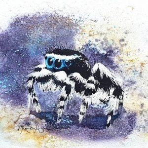 watercolor spider, watercolour spider, peacock spider, peacock spider painting, watercolour paintings by renata wright, renata wright, renata wright art, arachnid