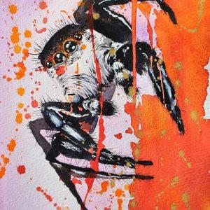 spider, spider art, watercolor spider, watercolour spider, jumping spider, arachnid, arachnology