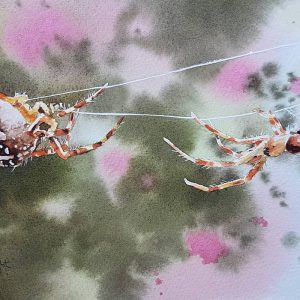 spiders in a web, watercolour spider painting, spiderweb